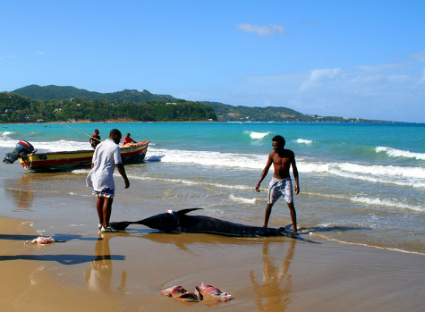 Jamaica Fishing